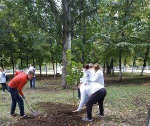 75 новых лип высадили в парке Победы в Самаре