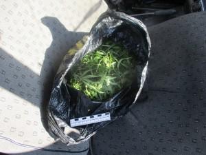 В Тольятти у мужчины нашли более 400 г марихуаны