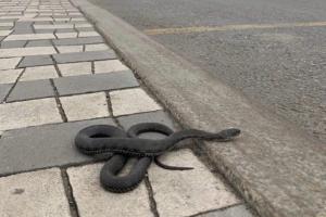 В Самаре заметили огромную змею