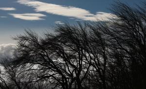 Сильные шквалистые ветры признаны самыми частыми и разрушительными опасными природными явлениями в России.