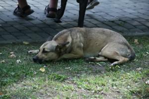 Из-за бешенства объявлен карантин в одном из районов Самарской области