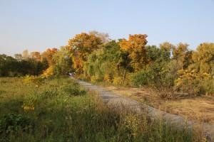 В Самарской области объявлен желтый уровень погодной опасности