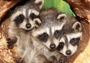 Всемирный день животных отметили в Самарском зоопарке