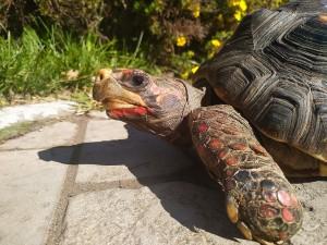 В Самарском зоопарке появилась самая обширная коллекция черепах среди зоопарков России