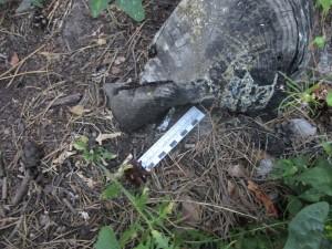 Тольяттинец делал наркозакладку на территории дачного массива