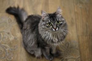 Самарцы смогут забрать домой щенка или котенка