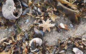Эти организмы выделяют огромное количество токсинов, животные в воде гибнут.