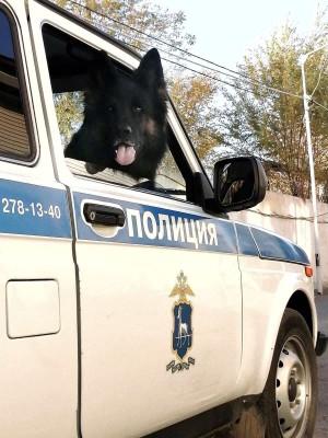 Собака в Самаре нашла преступника, который обокрал ребенка
