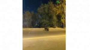 В Самаре водители заметили на одной из городских дорог трёх кабанов