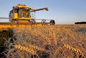 О предварительных итогах сельскохозяйственного сезона доложил заместитель министра сельского хозяйства и продовольствия регионаАлексей Акимов.