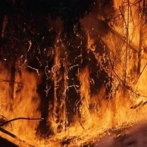Площадь крупнейшего в истории штата Колорадо пожара превысила 800 кв. км