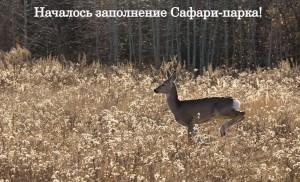Началось заполнение Питомника с сафари-парком в Самарской области