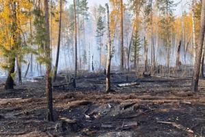 Чаще всего причиной возгораний становятся человеческая халатность и нарушение элементарных правил пожарной безопасности.