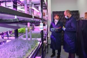 «ГринФаб» создала уникальную в нашем регионе сити-ферму, на которой организован процесс выращивания микрозелени методом гидропоники.