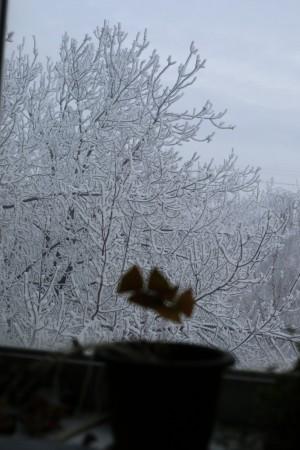 После умеренного тепла самарцев ожидает мокрый снег