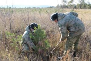 В Тольятти военнослужащие Росгвардии приняли участие во Всероссийской акции «Лес Победы»