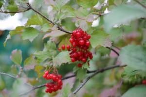 Ученые нашли натуральные продукты, способные подавлять covid-19
