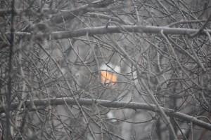 Синоптики обещают жителям Самарской области мороз до -19