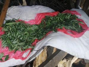 Житель Самарской области устроил у себятайник с марихуаной