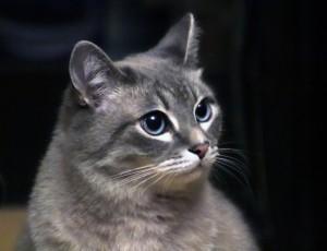 Россияне заводят кошек в полтора раза чаще, чем собак