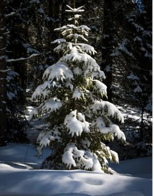 Наказывать рублем будут за незаконную вырубку деревьев.