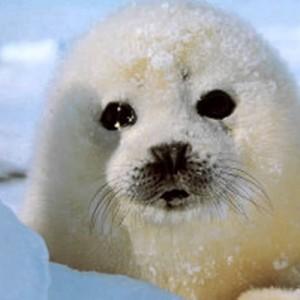 Прокуратура Дагестана проверяет информации о массовой гибели тюленей