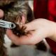 Разным породам собак характерны свои особенности роста ногтей. У некоторых пород этот процесс происходит быстрее, у других – медленнее.