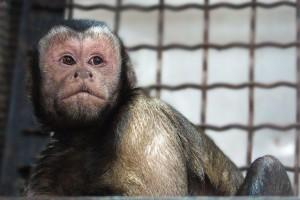 Праздник Международный день обезьян отметят в самарском зоопарке