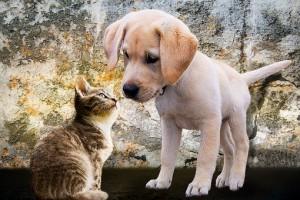 Губернатор отметил, что цивилизованное общество невозможно представить без гуманного отношения к животным.
