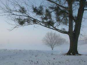 Из-за тумана в Самарской области объявили желтый уровень опасности