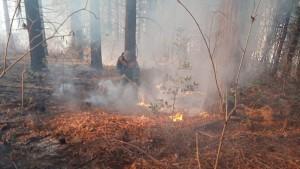 На территории Краснодарского края с 29 декабря было восемь очагов возгорания.