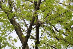 В Самаре разработали хозяйственный регламент для городских лесов