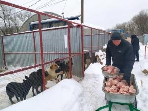 В Самаре приют для бездомных животных работает в соответствии с новыми законодательными требованиями