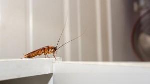 Специалист пояснила, что обычно эти насекомые активизируются дважды в год для размножения.