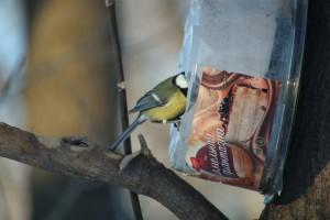 Хранители птиц: самарцев приглашают на конкурс экокормушек