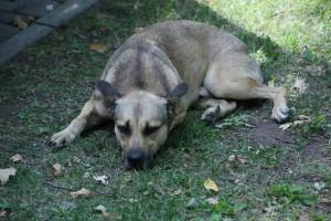 В Самарской области собака 20 дней ждала на холоде хозяев, пострадавших в ДТП
