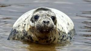 Одной из возможных причин гибели тюленей, обнаруженных на побережье Каспийского моря в Дагестане в конце прошлого года, мог стать выброс природного газа.