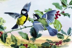 Ко дню орнитолога в России Самарский зоопарк объявляет онлайн-конкурс рисунков