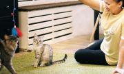 Передержка кошек с медуходомVIPуровня и по доступной цене