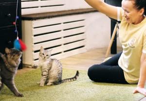 Передержка с медуходом для кошекhttps://murchalkin.ru– это полный комплекс услуг по проживанию, питанию и медицинскому уходу.