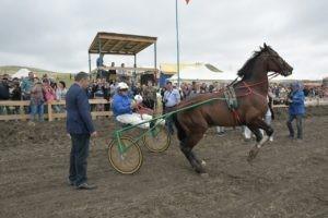 В 2021 году Федерация конного спорта России выступит соорганизатором «Толстовских скачек» в Самарской области
