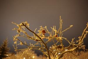 После оттепели жителей Самарского региона ждет мороз