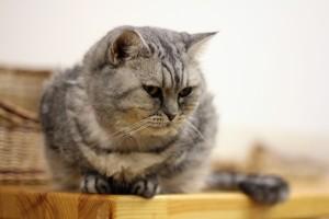 В Кировском регионе разрешили держать до 20 кошек в однушке