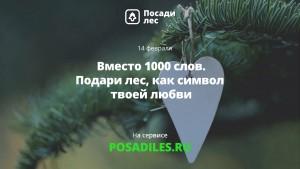 14 февраля россияне смогут подарить любимым лес