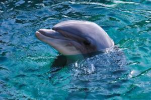 Ученые просят закрыть дельфинарии