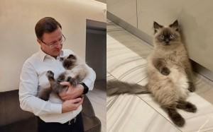 Губернатор Самарской области Дмитрий Азаров завел кота
