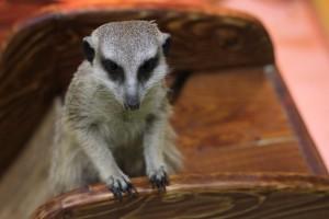 В Самаре нашли нарушения в частном зоопарке