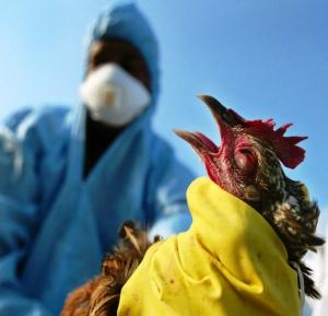 Оперативное выявление новой разновидности птичьего гриппа на юге России позволяет уже сейчас начать разработку тест-системы и создание вакцины.