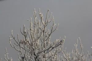 Метеоролог рассказала о наступлении в России новой климатической эпохи