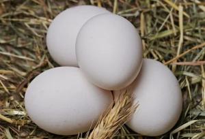 Уберечься от птичьего гриппа позволит отказ от употребления дикой птицы, сырых яиц и плохо обработанного мяса.